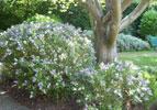 shrubs in garden