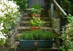 Flowers in pots on steps